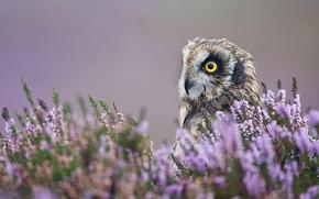 птица, сова, профиль, цветы, лаванда, макро
