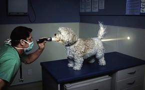 ветеринар, фонарик, свет