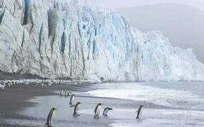 Penguins, ghiacciaio, onde