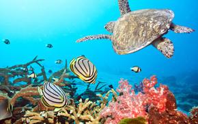 World Water, pesce, tartaruga, carta da parati
