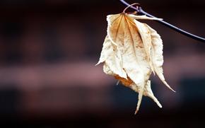 deja, pasado, marchitez, descolorido, rama, fondo, macro.