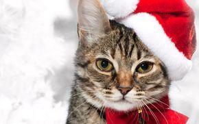 Capodanno, fumoso, gatto, rosso, arco, cappuccio, vacanza, baffi, vista