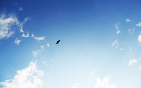 Himmel, Vogel, Blau