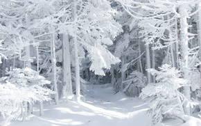 Naturaleza, invierno, historia, nieve, bosque