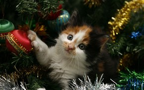 New Year, holiday, Tree, tinsel, cat, cat, kitten, New Year