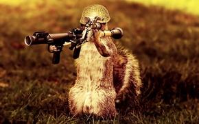 squirrel, soldier, launcher