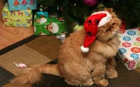 Capodanno, vacanza, gatto, gatto, mouse, giocattolo, abete, regali, rosso cappello di Babbo Natale, Capodanno