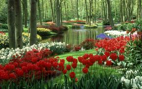 stagno, Tulipani, Keukenhof Gardens, Paesi Bassi