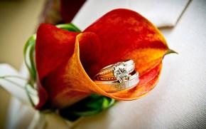 fleur, calla, orange, brillant, beau, Les anneaux de fianailles. Anneau, bijoux, or, noyaux, diamant
