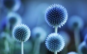 Macro), fiori, impianto. blu, colore, stato d'animo