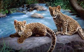 charles frace, Leopards, river, Art