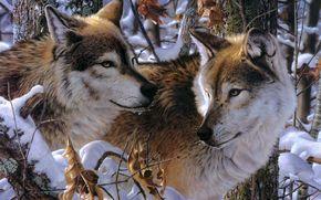 jay kemp, Loups, neige, Art