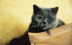 Katze, intelligent, Monokel