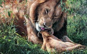 Terry Isaac, lion, jeune lion, paternit, belette, Art