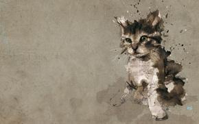 gatito, tratamiento, peridico