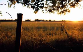 field, Herbs, scope, column, wire, sunset, evening, sun, rays, under the tree, foliage.