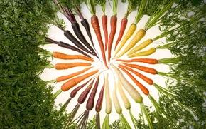 еда, морковь, изобилие цвета