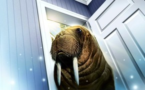 walrus, door, room