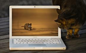 gatto, gatto, mouse, giocattolo