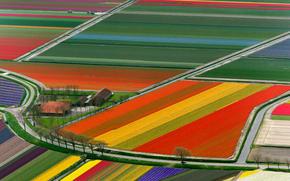 поле, тюльпаны, нидерланды