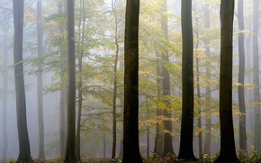 autumn, Trees, fog