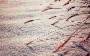 snow, Winter, macro