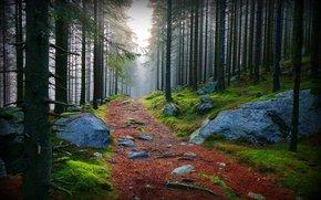 prioda, forest, road, stones