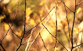 branches, young, naked, kidneys, background, blurring, color, tone, nature.