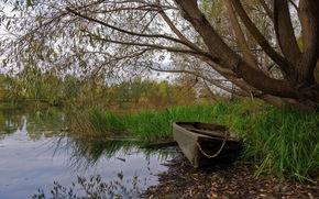 lago, barca, natura