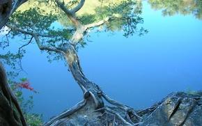 сакура, вишня, япония, река, берег, дерево