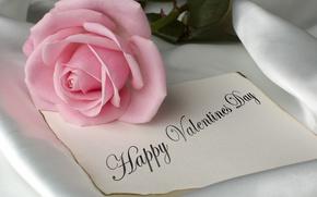 цветы, С Днем Святого Валентина, розовый, розовая роза, романтика, роза, День Святого Валентина, с любовью