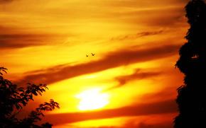 закат, небо, птицы, цвет