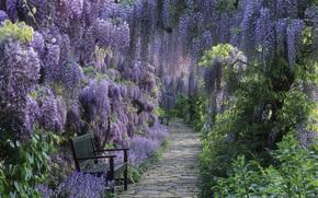 тропинка, цветы, кустарник, скамейка, парк