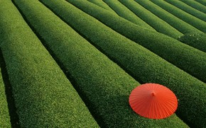 parapluie, feuillage, buisson