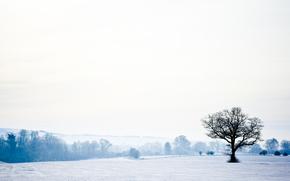 paesaggio, natura, inverno, neve, foresta, alberi, cielo