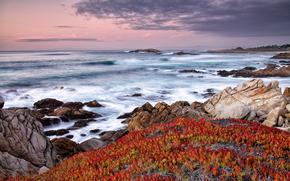 morze, niebo, Rocks, kwiaty