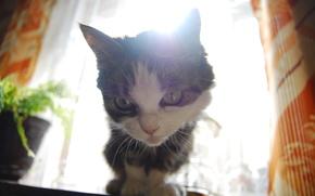 Кошка, солнце, взгляд, комната