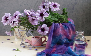 петуния, петунии, цветы, красивые, нежные, садовые, полевые, букет, сиреневый, весна, лето, нежность, нежно, красиво, красота, цветки, цветок, лепестки, природа, вода, лейка, бутылка, ткань