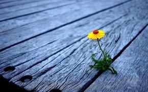Madeira, conselho, pavimentao, amarelo, flor