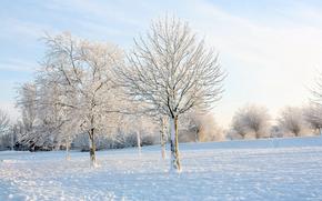 冬, 霜, 霜, 雪, 公園, ブッシュ, 木, ブランチ, 晴れた日, 太陽, 空, 光, 男, ランタン。