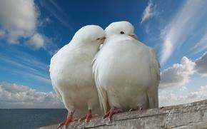 голубя, голубь, облака, небо, море, туловища, любовь, поцелуй, мир, романтический, День святого Валентина, страсть