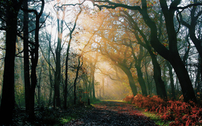 nature, forest, Morning, autumn, after rain, road, light, rays