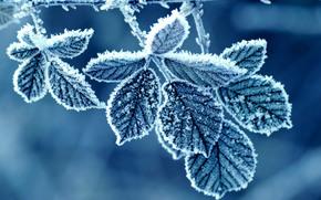 葉, バラ, 霜, 霜, パターン, 冬, 朝