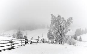 invierno, nieve, Los rboles, valla