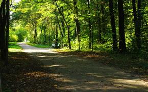 natura, paesaggio, albero, estate, fogliame, stagioni, terra, bel tempo, stato d'animo