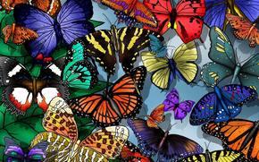 Farfalle, profumatamente, facilmente