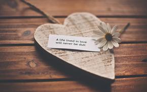sentimenti, amore, romanticismo, vita, riconoscimento, parole, camomilla, cuore