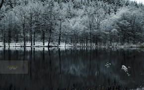 foresta, neve, lago, freddo