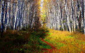 autumn, forest, Trees, pathway.