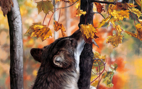 loup, automne, fort